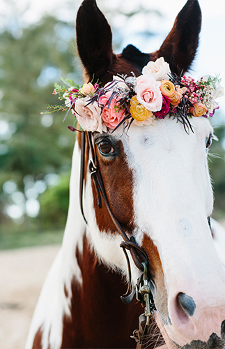 Passion Roots Absolutely Loved - horse wearing flowers