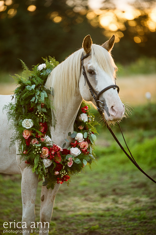 Sophisticated Florals, horse wearing flowers
