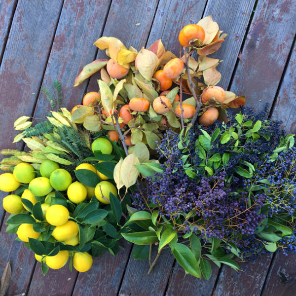 11/9 - Harvest at my parents place in California - lemons, persimmons, and privet berries