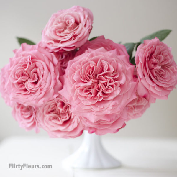 Flirty Fleurs Pink Garden Roses Study with Alexandra Farms -  Ashley Pink Garden Rose