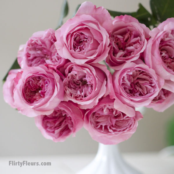 Flirty Fleurs Pink Garden Roses Study with Alexandra Farms -  David Austin Carey Pink Garden Rose