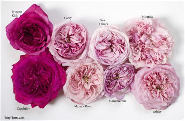 Flirty Fleurs Pink Garden Roses Study with Alexandra Farms - Princess Kishi, Romantic Antike, Mariatheresia, David Austin Carey, Pink O'hara, David Austin Capability, Mayra's Rose, Ashely, David Austin Miranda