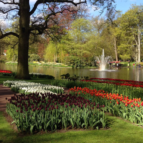 Elite Events Travel To Europe - visit Keukenhof Gardens in Hollad