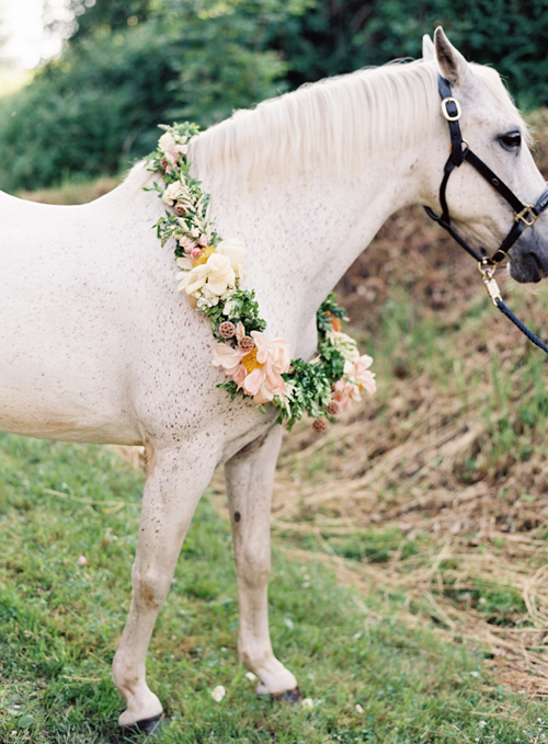 Lily Deluxe Blumen Vicki Grafton Photography - horse wearing flowers