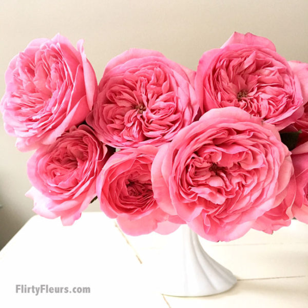 Flirty Fleurs Pink Garden Roses Study with Alexandra Farms -  Mariatheresia pink garden rose