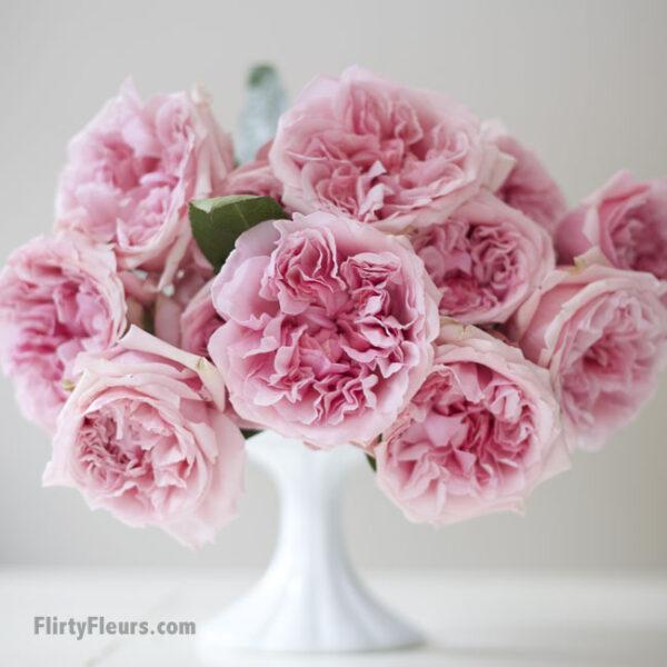Flirty Fleurs Pink Garden Roses Study with Alexandra Farms -  David Austin Miranda Pink Garden Rose