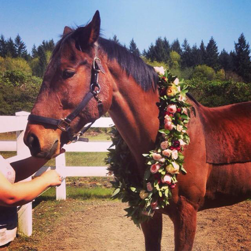 Zest Floral - horse wearing flowers