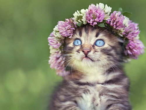 Kitten wearing a flower crown