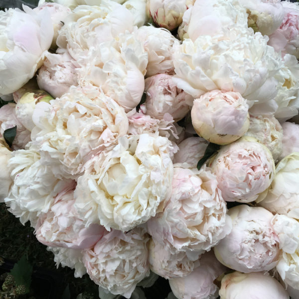 Flirty Fleurs - Florabundance Design Days 2017 - peonies