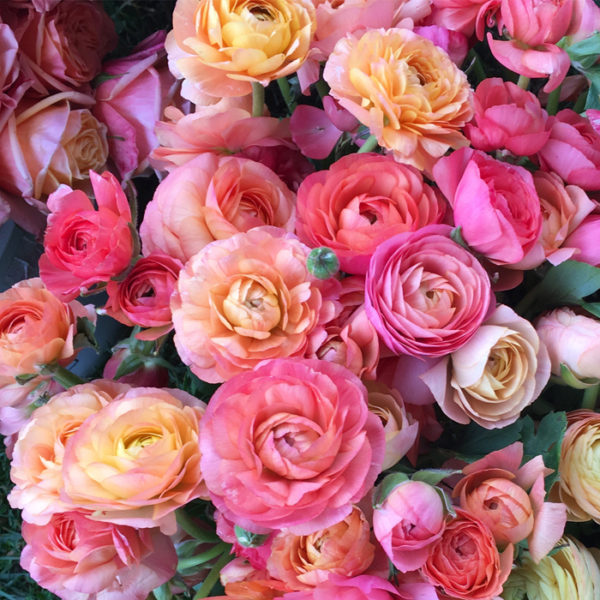 Flirty Fleurs - Florabundance Design Days 2017 - Ranunculus