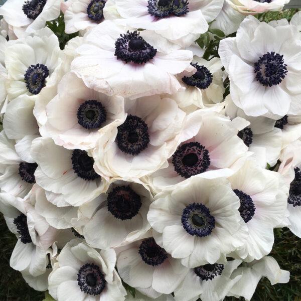 Flirty Fleurs - Florabundance Design Days 2017 - Anemones