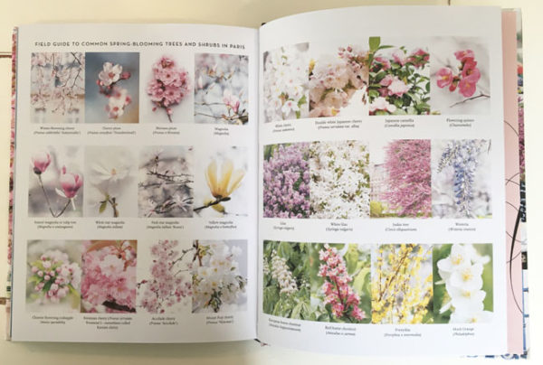 Paris In Bloom - Georgianna Lane - Field Guide to Blooming Branches