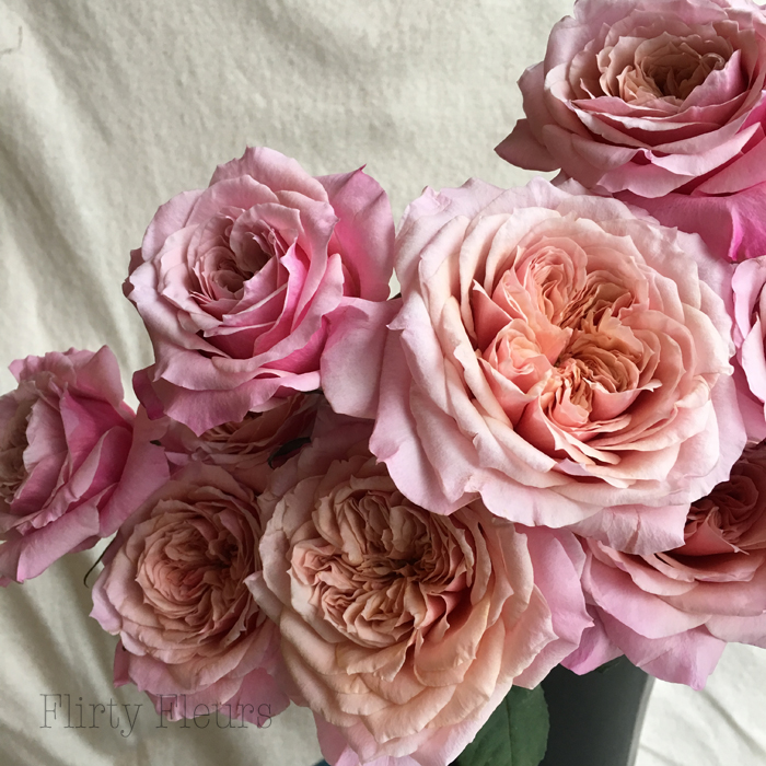 Miyabi Garden Roses by Alexandra Roses, Photographed by Flirty Fleurs