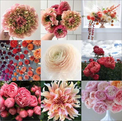 ranunculus, dahlias, peonies, garden roses - on flirty fleurs flower blog