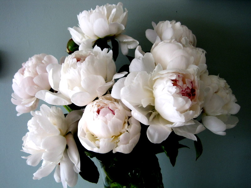 Peonies The Queen Of Flowers Flirty Fleurs The Florist Blog