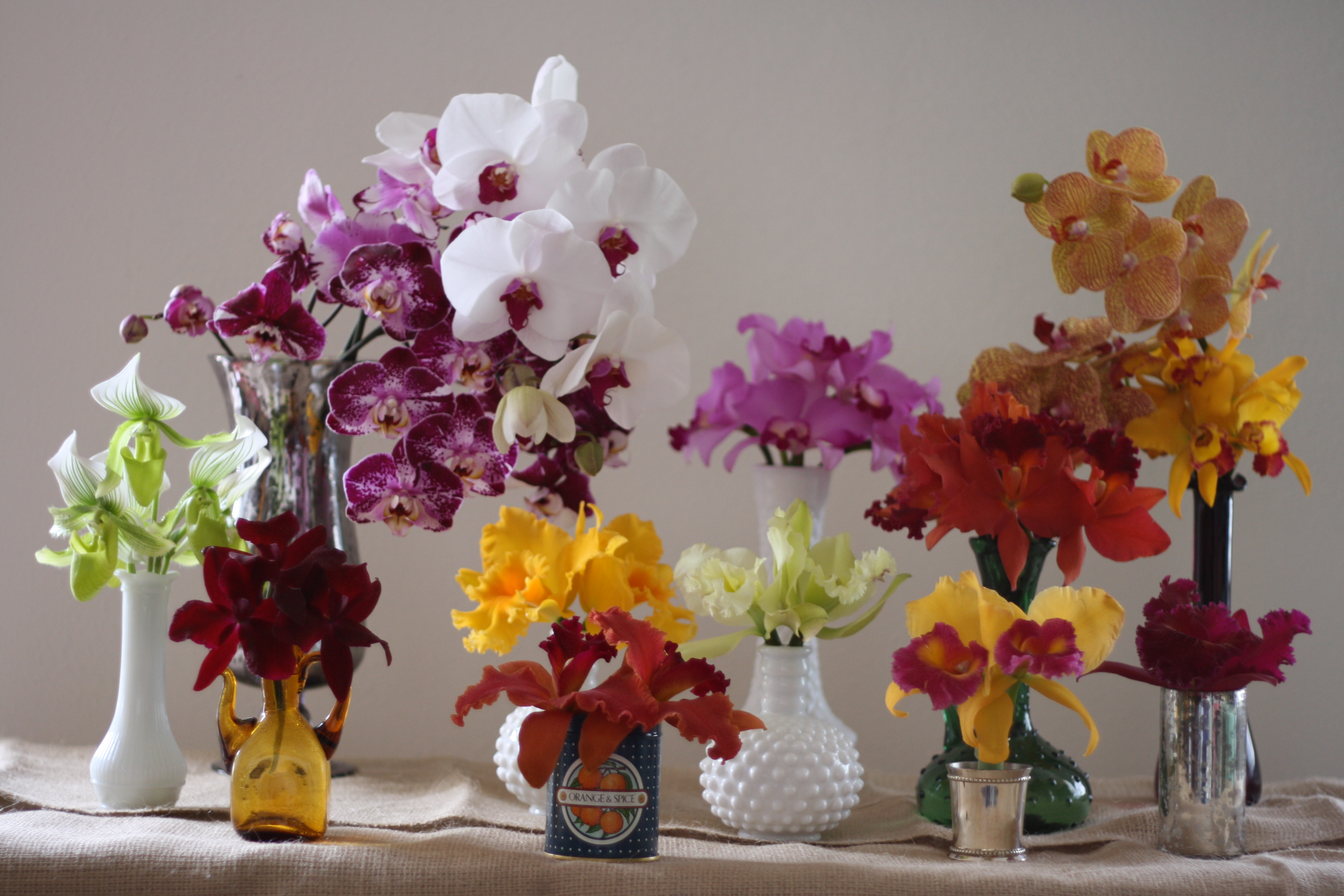 Orchids from Mayesh Wholesale
