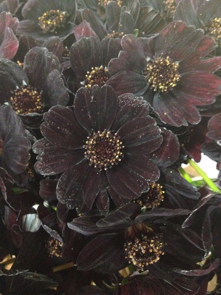 chocolate cosmo flirty fleurs the florist blog inspiration for floral designers. Black Bedroom Furniture Sets. Home Design Ideas