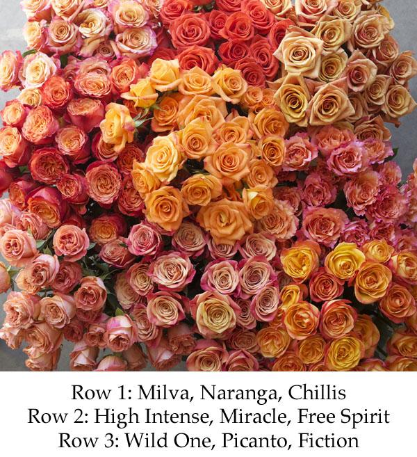 colors of orange roses