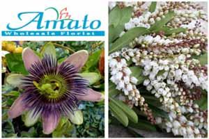 Denver Wholesale Florist