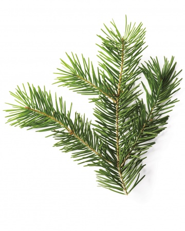 christmas green guide douglas fir - Christmas Greens