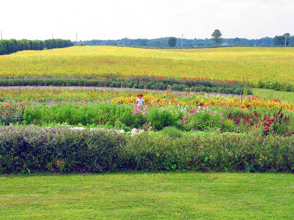 Andrea LynnVale Farms