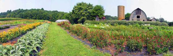 Virginia Flower Farm