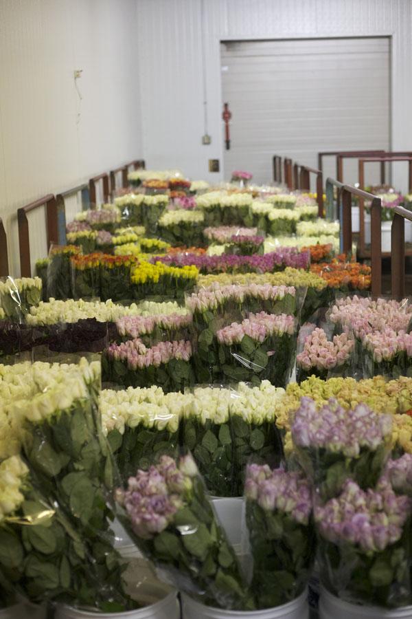 Myriad flower farm