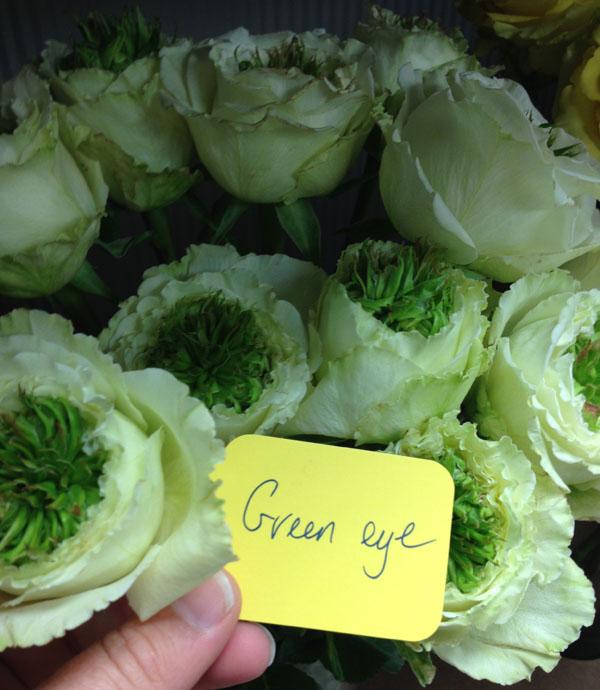 Green eye roses