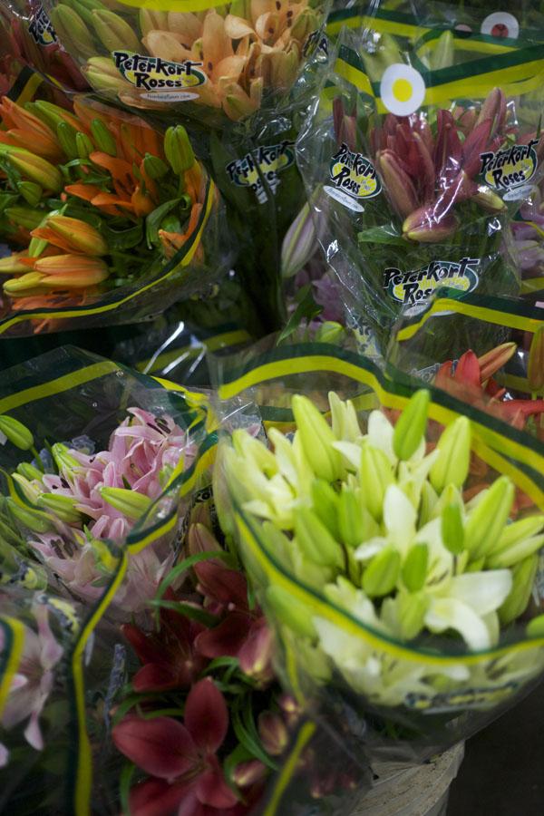 peterkort roses grows lilies