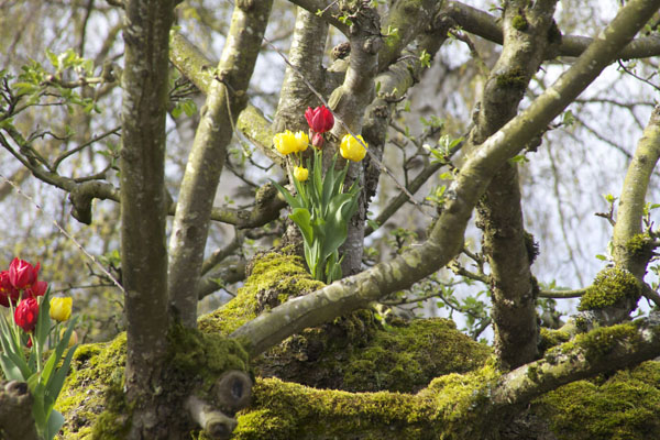 tulips in a tree