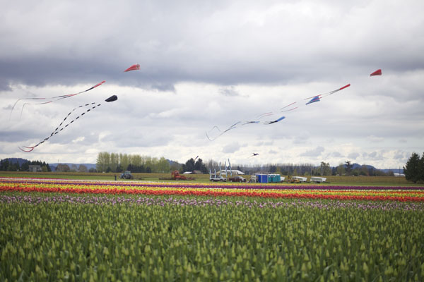 tulips and kites