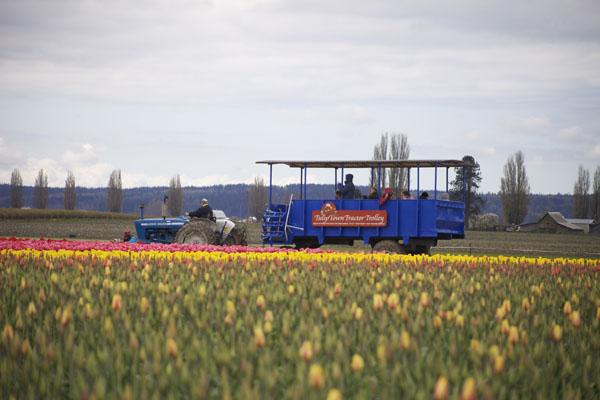tulip trolley