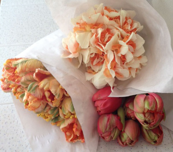 peach parrot tulips, pink double tulips, peach daffodils