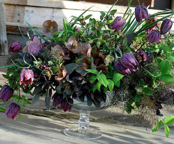 purple fritillaria