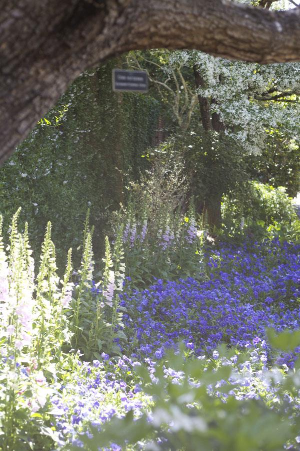 foxglove flower garden