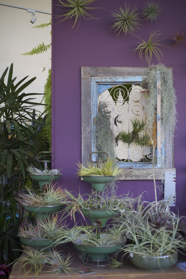 airplants and tillandsia
