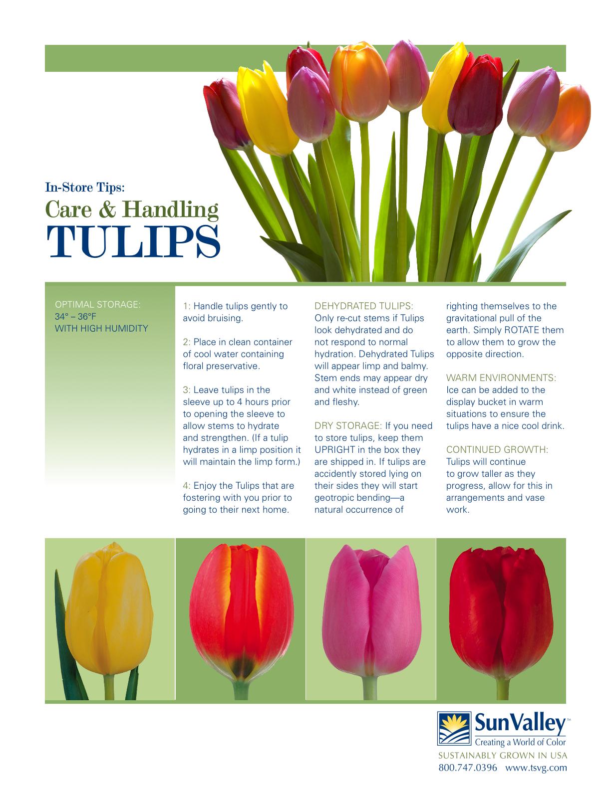 SV_RP_TulipCareStore-1