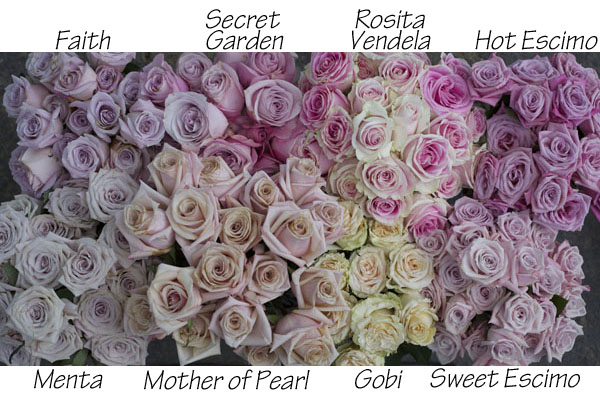The Blush Rose Study Flirty Fleurs The Florist Blog Inspiration For Floral Designers