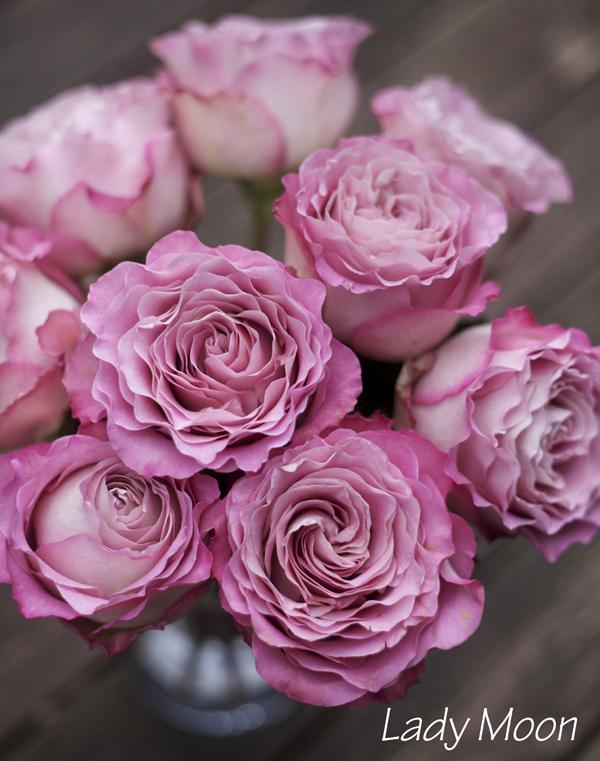 Lady Moon Rose
