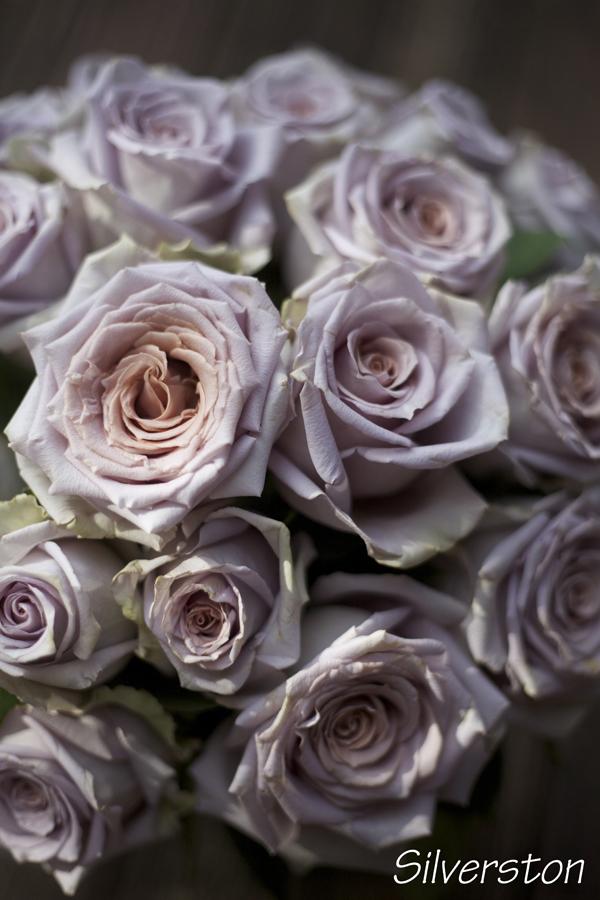 Silverston Rose