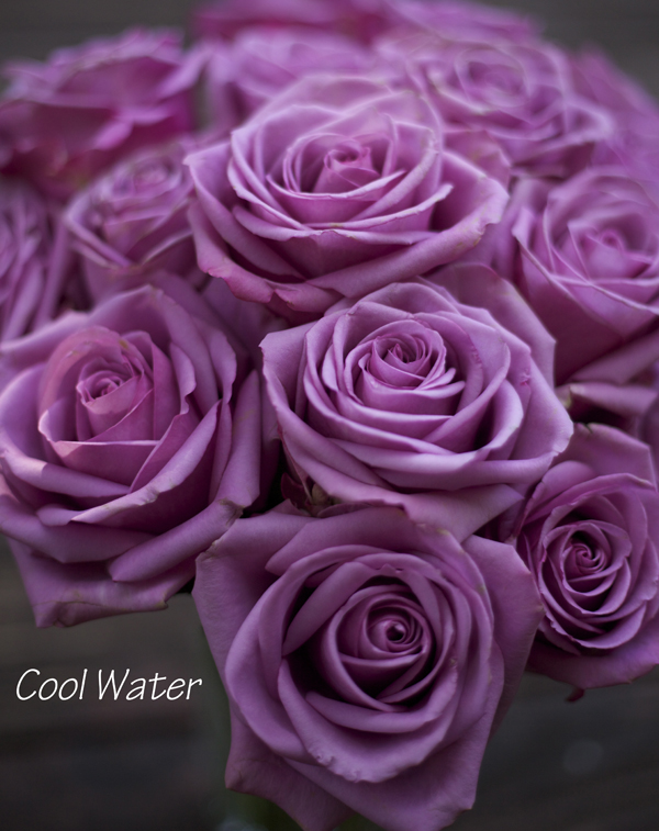 Purple roses mean best flowers and rose 2018 for What color is the friendship rose