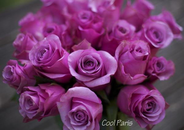 Cool Paris Rose