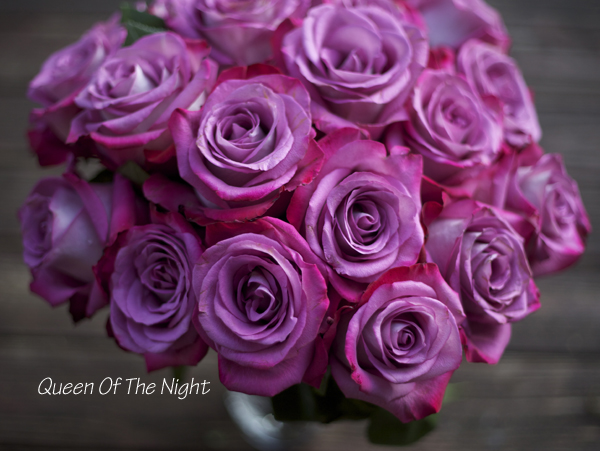 Queen of the Night Rose