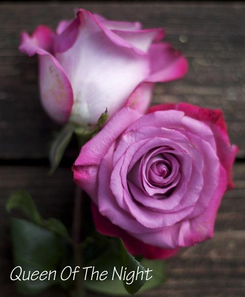 purple rose by harvest wholesale