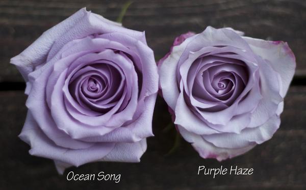 The Lavender Purple Rose Study Flirty Fleurs The Florist Blog