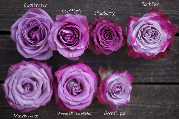 the lavender purple rose study flirty fleurs the florist blog