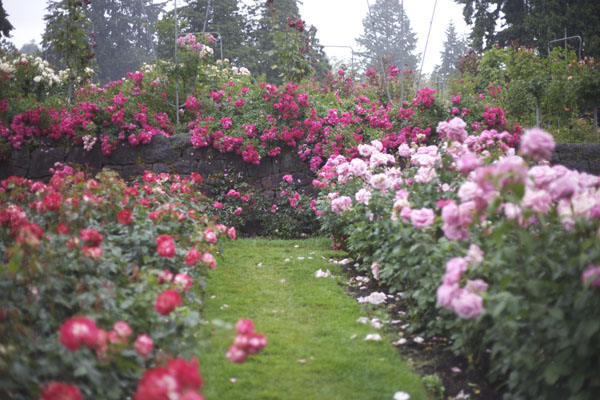 Over The Garden Walk: Portland International Rose Test Garden
