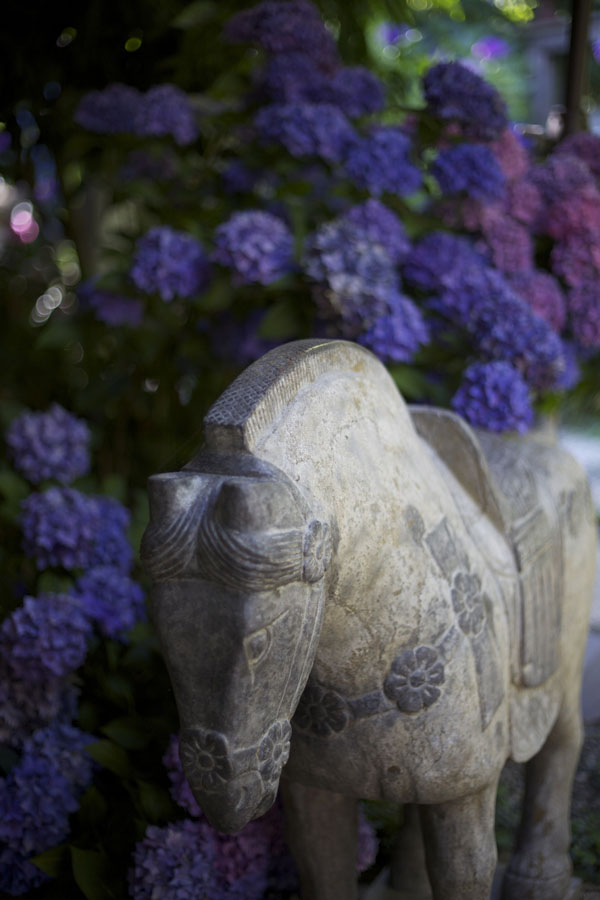 One of Jerry's beautiful art pieces from China, lovely amongst the hydrangeas.