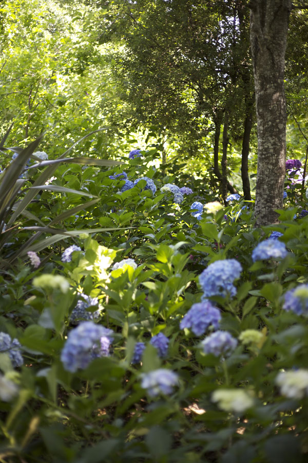 Even though it was about 100 degrees this day, standing under the trees and amongst the hydrangeas was quite refreshing.