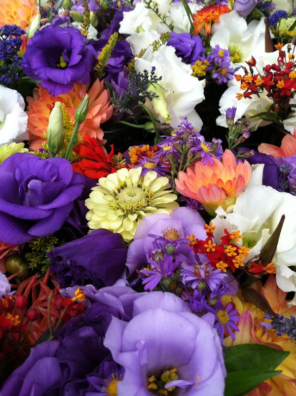 Summer Flower Mixture
